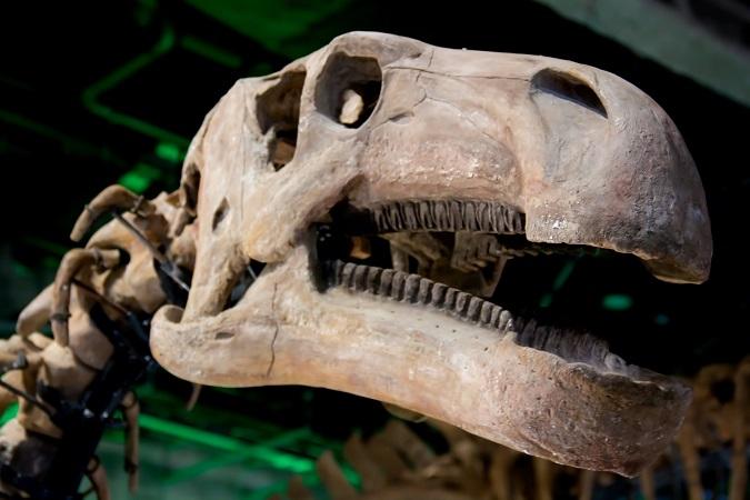 23歳 処女 化石